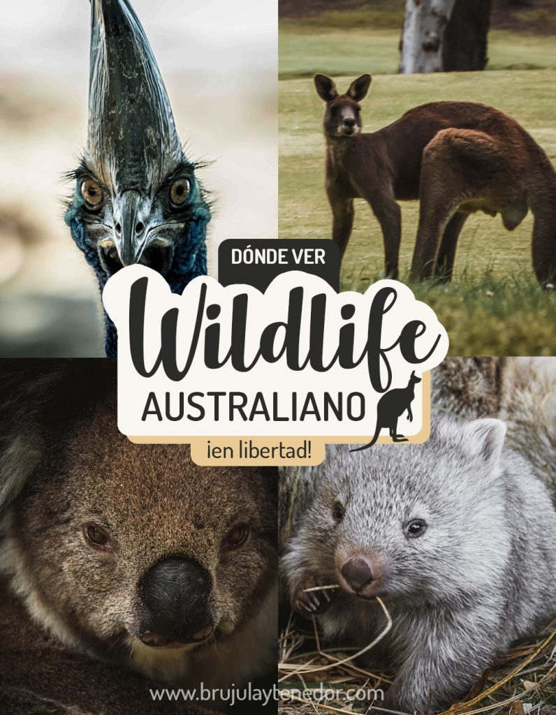 wildlife Australiano, donde ver animales en libertad