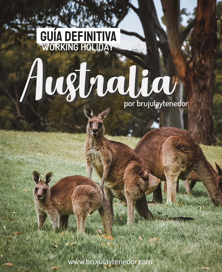 guia definitiva para la working holiday australia